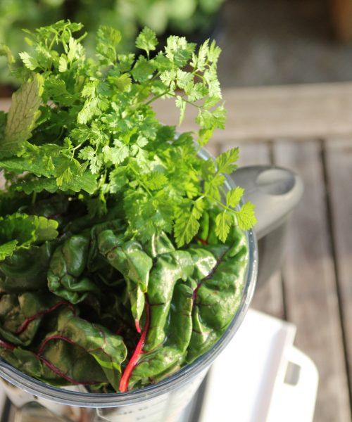 Die Die Zubereitung von Grünen Smoothies gelingt am besten im Hochleistungsmixer